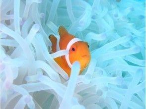 【東京都・池袋】東京から日帰り!伊豆半島で体験ダイビング!の魅力の説明画像