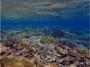 プランの魅力 Underwater with sparkling coral reefs の画像