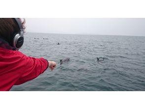 プランの魅力 野生海豚! の画像