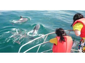 プランの魅力 聊天海豚! の画像