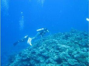 【沖縄・西表島】ライセンス取得者向け!海をじっくり楽しむファンダイビング(1ダイブ:半日コース)の魅力の説明画像