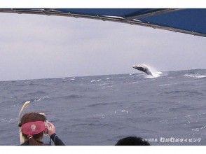 【鹿児島・奄美群島沖永良部島】感動体験!クジラスイムの魅力の説明画像