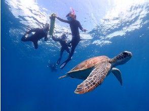 プランの魅力 ウミガメと一緒に泳ごう♪ の画像