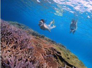 プランの魅力 シュノーケリングの舞台は日本一のサンゴ礁! の画像