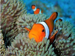 プランの魅力 沢山の熱帯魚に囲まれて癒やしの一時を の画像