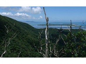 【沖縄・西表島】西表島のてっぺん古見岳へ!トレッキングツアーの魅力の説明画像
