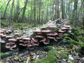 プランの魅力 自然豊かな天然キノコの宝庫。 の画像