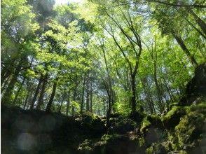 プランの魅力 人跡未踏の原始林と言われる青木ケ原樹海。 の画像