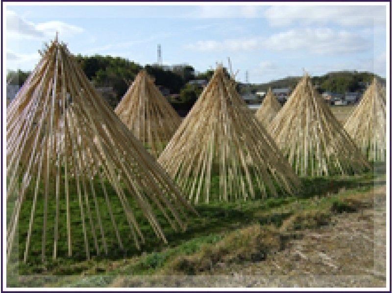 プランの魅力 竹の天日干し の画像