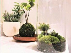 プランの魅力 皆さまの声におこたえし、お部屋のグリーンインテリアに最適な「苔玉」と「苔テラリウム」づくりが一緒になりました。 の画像