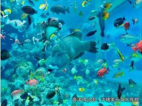 プランの魅力 冲绳美丽海水族馆门票! の画像