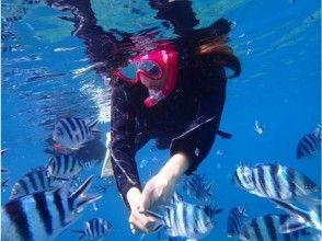 プランの魅力 お魚の餌付け体験も無料 の画像