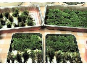 プランの魅力 苔は国内産自然苔です の画像