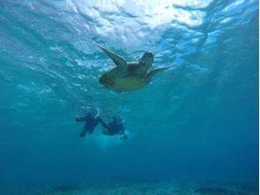 [沖繩宮古島] WEB限制價格!滿意度120%!海龜的描述圖像W'潛水的魅力(上午和下午)