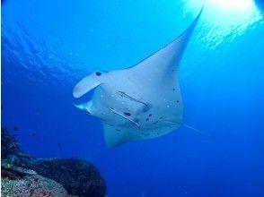 プランの魅力 360度パノラマの海で、水中の生き物を間近に見られます の画像