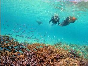 プランの魅力 您可以在360度全景海洋中近距离观看水下生物 の画像