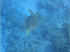 プランの魅力 也许你会遇到海龟? の画像