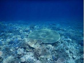 【沖縄県・ウェイクボード】ウェイクボードで沖縄の海の上を滑走!ウェイクボード(15分×2セット)の魅力の説明画像