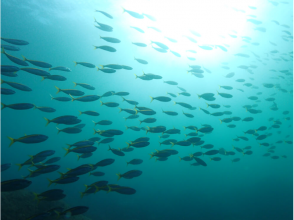 [神奈川縣,三浦半島]初學者的歡迎!城島島潛水經驗介紹魅力形象也能燒烤