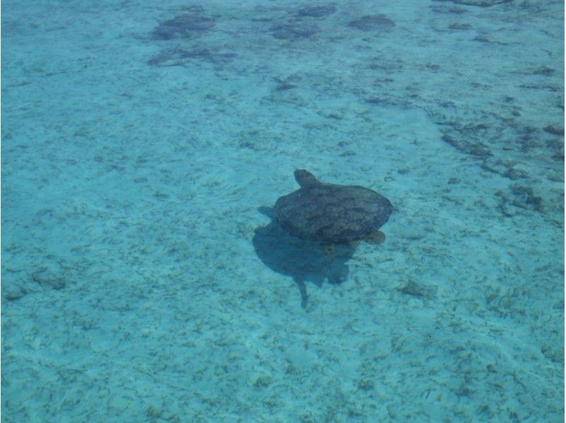 プランの魅力 道中には海ガメも! の画像