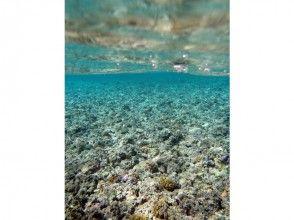 プランの魅力 coral の画像