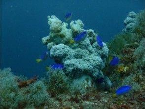 プランの魅力 南国チックな魚たち♪ の画像