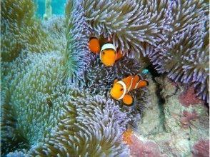 [沖繩小濱抵港及離港】★島嶼登陸★&★您Sakanahatake珊瑚礁浮潛★旅遊吸引力的描述圖像的幻象