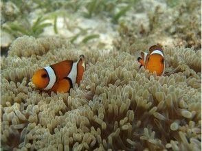 【沖縄・石垣島】シュノーケリングサンゴおさかなを楽しむの魅力の説明画像
