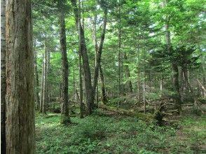 プランの魅力 Afternoon tour is a walk through the primeval forest の画像