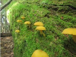 プランの魅力 Mushroom forest ... の画像