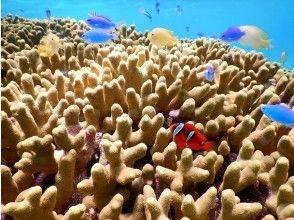 プランの魅力 水中はカラフルなサンゴや魚がいっぱい の画像