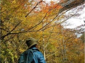 【福島・裏磐梯】トレイルウォーキング(小野川不動滝、五色沼、紅葉の中津川渓谷)の魅力の説明画像