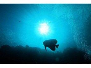 【ボートで行く青の洞窟体験ダイビング】ツアー写真プレゼント・餌付け付き・快適なボートでご案内の魅力の説明画像