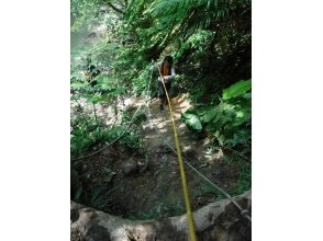 Of [Okinawa Prefecture Kunigami-gun Ōgimi] Intermediate trekking tour that aims to pristine waterfall charm of description image