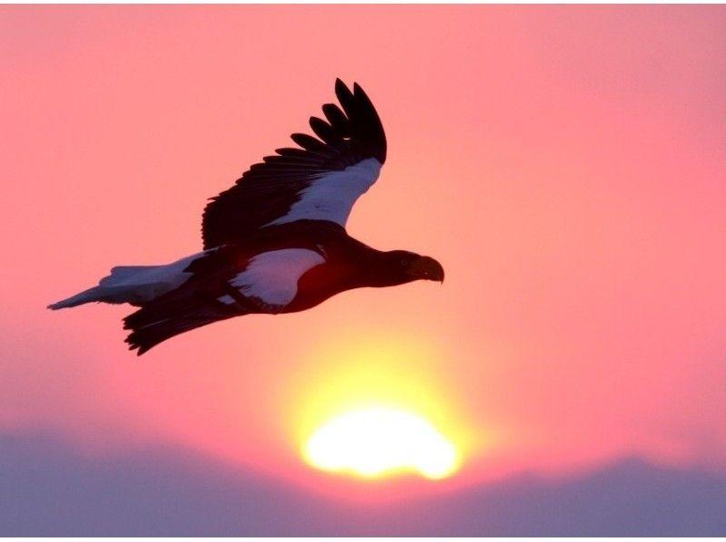 プランの魅力 オオワシと朝日 の画像