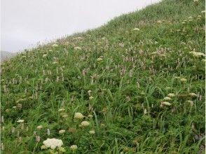 【北海道・礼文島】フラワーコースガイド(お花ガイド・桃岩展望コース)の魅力の説明画像