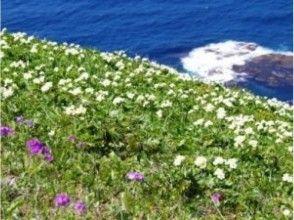 【北海道・礼文島】礼文島、夕方のお花を満喫 夕方お散歩コースガイドの魅力の説明画像