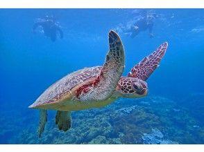 プランの魅力 Let's swim with sea turtles on Yakushima! の画像