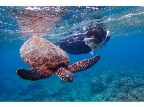 プランの魅力 Swim alongside sea turtles! の画像
