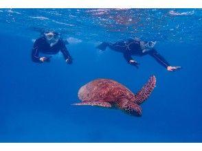プランの魅力 Impressive to swim together! の画像