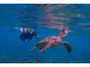 プランの魅力 Sea turtle breathing の画像