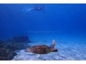 プランの魅力 Sea turtles swimming on the bottom of the water の画像
