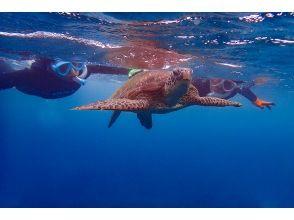 プランの魅力 Time with sea turtles の画像
