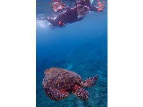 プランの魅力 Sea turtles coming up to breathe の画像