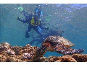 プランの魅力 Don't touch the sea turtles! ^^; の画像
