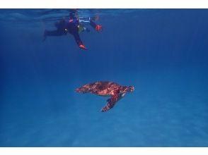 プランの魅力 Ah! !! !! Sea turtle! !! !! の画像