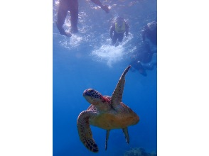 プランの魅力 Sea turtles there! の画像