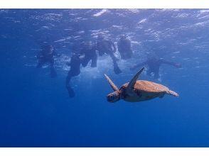 プランの魅力 Big sea turtles too! の画像