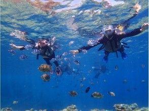 プランの魅力 熱帯魚にエサあげ体験 の画像