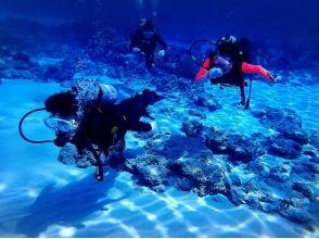 【沖縄/沖縄市(コザ)・北谷・宜野湾】短時間で挑戦できる! 大サンゴ礁ビーチで体験ダイビングの魅力の説明画像